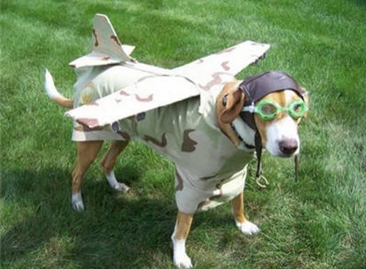 собака -самолет
